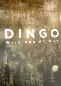 The Australian bush is at war... 'DINGO' follows farmer and canine advocate Dave Graham as he hunts for solutions to the dilemma surrounding Australia's native canine the Dingo.  Read more & # Watch #Dingo: Wild Dog at War (2013) online at:  http://www.justclicktowatch.to/documentary/dingo-wild-dog-at-war-2013/
