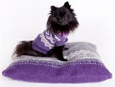 Oppskrift: Marius®© genser for hund (I Love Dogs. Dog Sweaters, Knitting Charts, Knitting Projects, Knitwear, Slippers, Crochet, Shopping, Sewing, Dogs