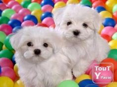 Cute Puppy - Babies Pets and Animals Photo (17268862) - Fanpop