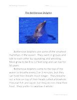 First Grade Reading Comprehension - The Bottlenose Dolphin