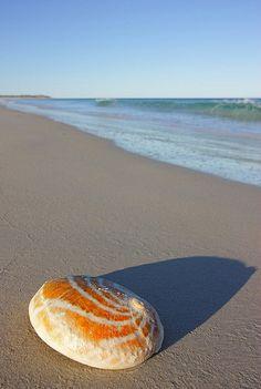 Abalone Shell, Eyre Peninsula, Australia