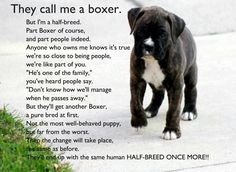 This so looks like our Ace.  And for those of you who know him, he is a half breed.  Half Boxer the other half human!  Love you Ace!