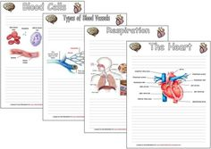 Blood, Heart, Circulatory System Notebooking pages