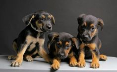 We need The Pets' Trust because beautiful puppies likes these ones are dumped at Miami Dade Animal Services every day.  They're dumped by the dozens and not all find loving homes.