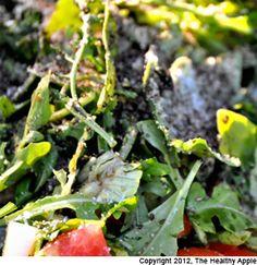 Avocado Arugula Salad with Basil Lemon Dressing