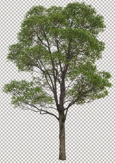 Photoshop Tree Library (part - 60 big trees shaded standard file isolated background Architecture Graphics, Landscape Architecture, Landscape Elements, Landscape Design, Photoshop Tree, Tree Silhouette, Big Tree, Cool Landscapes, Image Hd