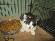 LOLLIPOP HAS BEEN RESCUED BY CAT ADOPTION TEAM, WILMINGTON, FOR FOSTER CARE