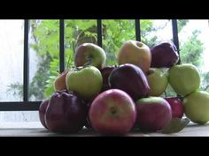 Stop Braeburn Apple Tree Price Inflation http://www.tytyga.com/Braeburn-Apple-p/braeburn-apple-tree-.htm