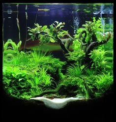 Planted aquarium...looks small, maybe under 10 gallons.