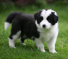 Fluffy cute!!