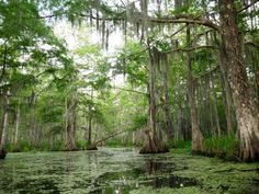 Things to do in New Orleans Area. Take a Hike in Jean Lafitte National Park New Orleans Vacation, New Orleans Travel, Hiking Tent, Camping And Hiking, Vacation Trips, Vacation Spots, New Orleans Bayou, Jean Lafitte, Hiking Spots