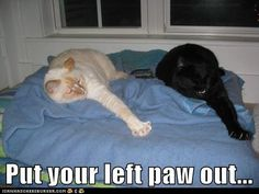 Put your left paw in....