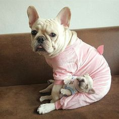 French Bulldog Mom and Puppy
