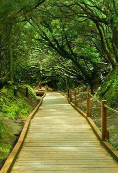 En el Parque Rural de Anaga se encuentra este sendero, que en su recorrido más largo se extiende dos kilómetros. Accesible para todos, transita por un antiguo camino real que unía Anaga y La Laguna y recibe su nombre porque a lo largo de la ruta, podrás tocar, oler o mirar algunos elementos que se van indicando en paneles. Pero lo más impresionante de todo es transitar entre la laurisilva, un bosque frondoso típico de Canarias. Cool Places To Visit, Places To Travel, Travel Around The World, Around The Worlds, Places In Spain, New Background Images, Canary Islands, Adventure Is Out There, Spain Travel