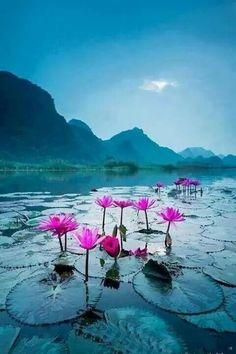 Morning lilies. Ha Noi, Viet Nam. Breathtaking!!!