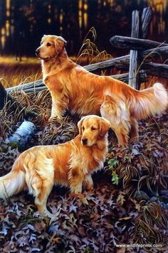 In this Jerry Gadamus print a pair of gorgeous golden retrievers stand alert in…