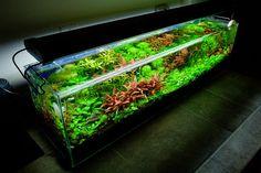 12 Gallon Aquarium Dutch Aquascape planted tank by binbin9