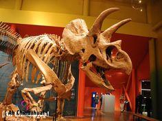 ¿Conoce el museo del Desierto? TURISMO EN CHIHUAHUA. Delicias tiene el museo del Desierto que cuenta con grandes exposiciones de reliquias del estado. Le invitamos a visitar este hermoso lugar en su próximo viaje al estado increíble estado de Chihuahua. www.turismoenchihuahua.com