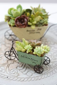 ANYthing can be planted with succulents Succulent Gardening, Succulent Pots, Garden Plants, Container Gardening, House Plants, Succulents In Containers, Cacti And Succulents, Planting Succulents, Planting Flowers
