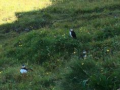 Bald Eagle, Island, Bird, Animals, Animales, Animaux, Birds, Islands, Animal