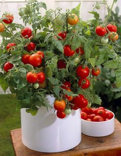 Tomate Topf-Ø ca. Herb Garden, Vegetable Garden, Home And Garden, Landscape Design, Garden Design, Small Space Gardening, Urban Gardening, Garden Borders, Planting Vegetables