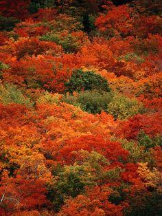 Cape Breton colours