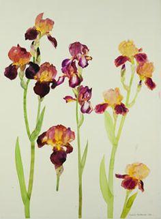 Elizabeth Blackadder 'Irises'