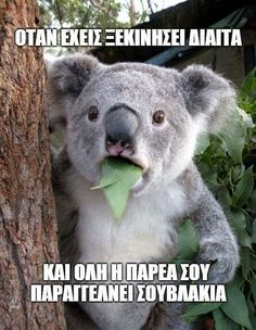 A Surprised Koala meme. Caption your own images or memes with our Meme Generator. 9gag Funny, Funny Puns, Hilarious, Funny Humor, Funny Sarcastic, Funny Sayings, Koala Meme, Funny Koala, Hilarious Stuff