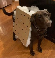 70 Clever, Punny & Funny Halloween Costumes that you can DIY - Hike n Dip What's Halloween if you don't put on some Punny Halloween Costumes? Here are 70 Best Clever Halloween Costumes that you can easily DIY at your home. Cute Funny Animals, Funny Animal Pictures, Cute Baby Animals, Funny Dogs, Punny Halloween Costumes, Pet Costumes, What's Halloween, Best Dog Costumes, Clever Costumes