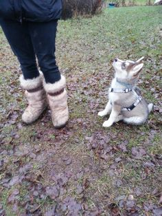 Matching puppy and boots ;)