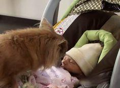 Byli nerwowy dostosować swoje nowe dziecko do domu, poznać psa, to wtedy widzieli