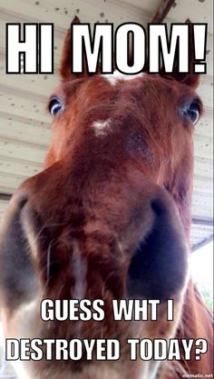 funny horse memes / funny horse memes - funny horse memes hilarious - funny horse memes equestrian - funny horse memes videos - funny horse memes humor - funny horse memes so true - funny horse memes western - funny horse memes jokes Funny Horse Memes, Funny Horse Pictures, Funny Animal Jokes, Funny Horses, Cute Horses, Cute Funny Animals, Animal Memes, Funny Memes, Horse Humor