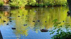 Sedona AZ Oak creek