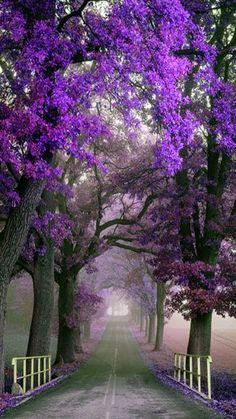 Lavender and Purple Photo