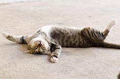 chat qui dort au soleil