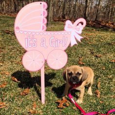 Puppy announcement! New puppy! Puggle ideas