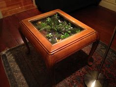 Cool and Adorable Coffee Table Terrarium. Adorable Nice Simple Cool Awesome Coffee Table Terrarium Design With Woodne Top Design And Cool Brown Accent Design. Snake Terrarium, Moss Terrarium, Terrarium Ideas, Coffee Tables For Sale, Cool Coffee Tables, Small Glass Greenhouse, Coffee Table Terrarium, Succulent Cuttings, Succulents