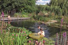 Zwemvijver - Biotop Benelux