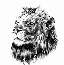 It s a great moment when you re choosing a lion tattoo design, get ready to take a look at the amazing top 100 lion tattoo designs, you must see! Lion Head Tattoos, Wolf Tattoos, New Tattoos, Lion Tattoo Design, Tattoo Designs, Tattoo Ideas, Lion Profile, Long Hair Designs, Celtic Tattoos