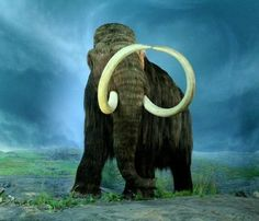 Mammoth Skeleton Discovered In Iowa