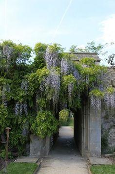 It's a beautiful world! Simply Beautiful, Beautiful World, Wisteria, Topiary, Wander, Paths, Sidewalk, England, Nature
