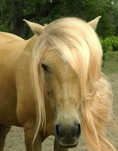 <b>Time to stop even trying with our lackluster manes, humans.</b> Horses put us all to shame.