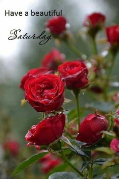 Flowers roses red ana rosa New ideas Love Rose, Pretty Flowers, Pot Plante, Colorful Roses, Rose Cottage, Happy Saturday, Saturday Quotes, Weekend Quotes, Saturday Morning