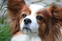 Papillion by Rico., via Flickr