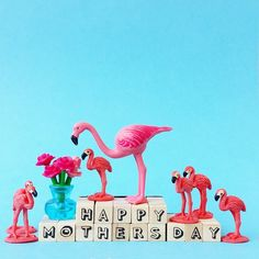 Happy Mothers day! #aflamingoaday #Mothersday #mother #flamingos #flowers #flamingo #love #family #happy