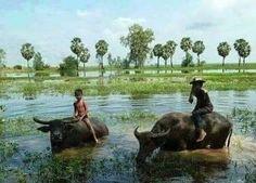 ภาพชนบทไทย  เหลือน้อยลงทุกที จากทุนใหญ่ของชาวต่างชาติ และนักการเมือง ข้าราขการ และเนายทุนในประเทศที่เห็นแก่เงิน