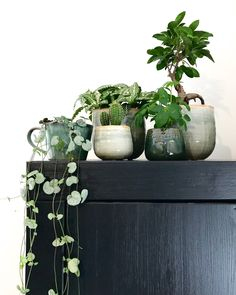 planter ideas with hibiscus & hibiscus planter ideas . planter ideas with hibiscus Green Plants, Potted Plants, Indoor Plants, Plant Pots, Hanging Plants, Garden Gazebo, Indoor Garden, Cactus Plante, Balkon Design