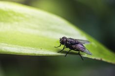 How to get rid of house flies — Country Living UK House Fly Infestation, Keep Flies Away, Fly Live, Prices Candles, Country Living Uk, Kitchen Window Sill, Citronella Essential Oil, Citronella Candles, Candle Set