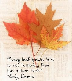 Emily Bronte.  Every leaf speaks bliss to me...