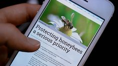 NewCa.com: 2016 Canada Blooms. Bring Back The Bees The bees need us. Join General Mills in planting 35 million wildflowers to help the bees. @Canada Blooms #canadablooms2016 #canadablooms #flowers #florist #plants #blossom #bloom #blooms gardening #flowerparty #gardens #BringBackTheBees #HoneyNutCheerios #Cheerios